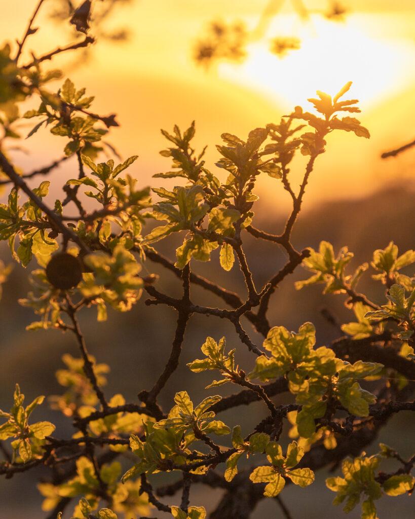 Golden Hour - California Sunset