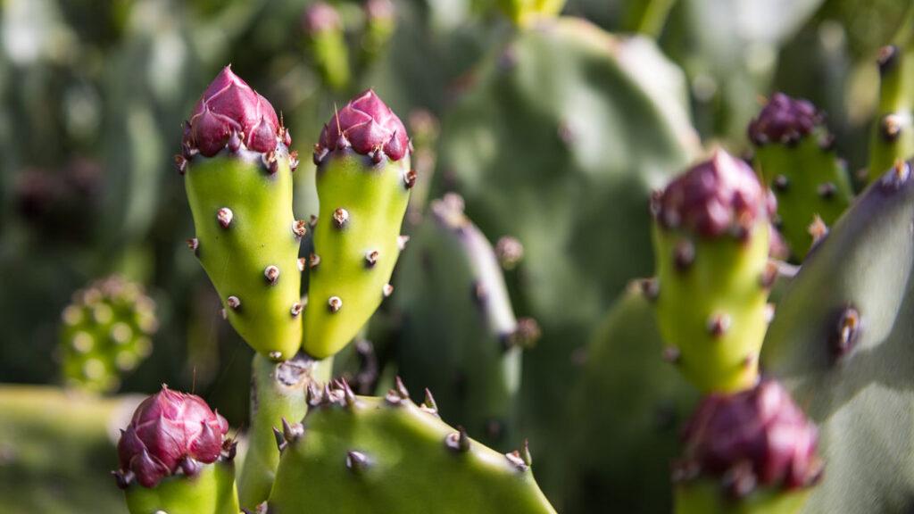 Cactus Cropped at 16:9 Aspect Ratio
