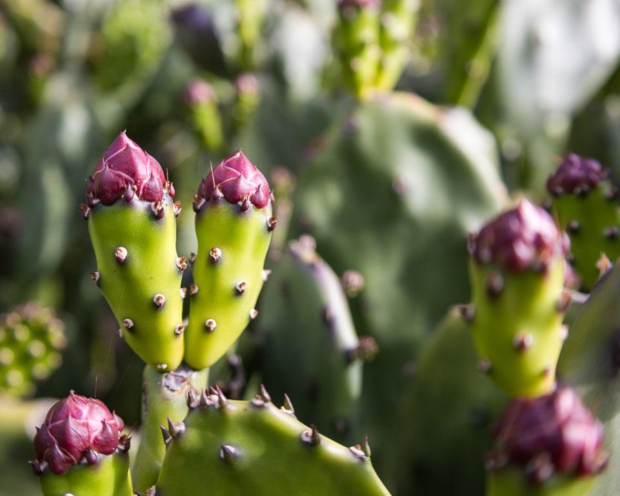 Cactus Cropped at 5:4 Aspect Ratio