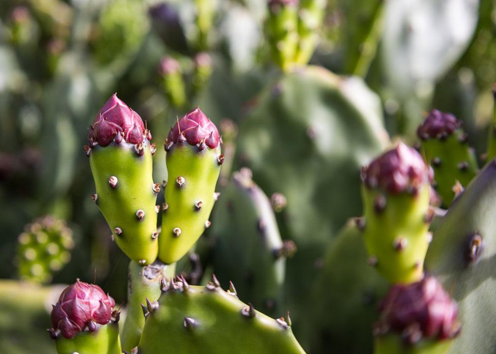 Cactus Cropped at 7:5 Aspect Ratio